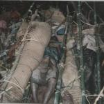 Dead Body of Pakuakhali Genocide- 1